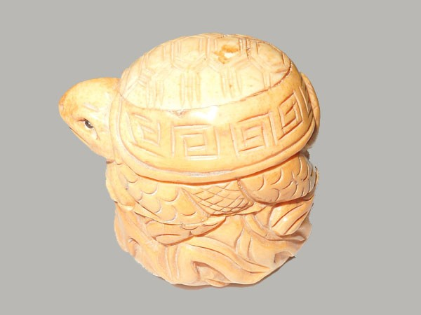tortue-os-sur-panier